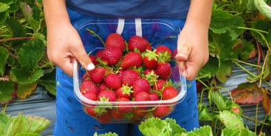 Where to pick berries in Metro Vancouver